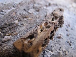 Pinzas de tender comida por termitas