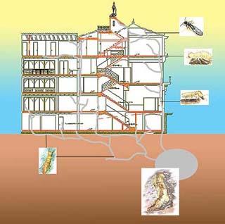 Termitero-ciudad.jpg