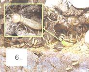Aparencia_termitas.jpg