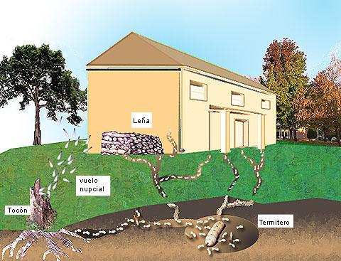 Ejemplo de ataque de termitas en una casa
