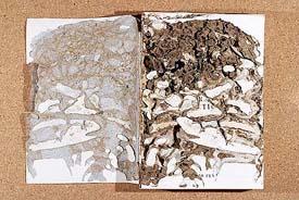Libro comido por termitas