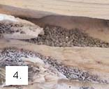 galerias_termita_madera_seca.jpg