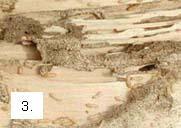 galerias_termitas_subterraneas.jpg